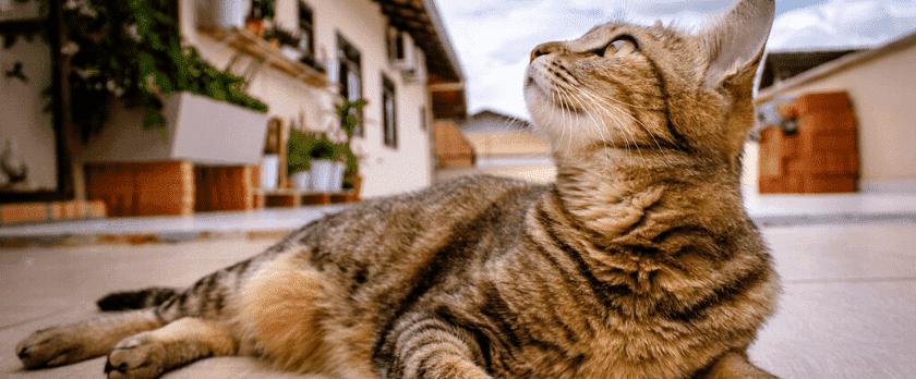 仙台市の探偵によるペット捜索調査と浮気調査